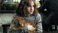 Hollywood, Uluslararası Kedi Günü'nü Nasıl Kutladı?